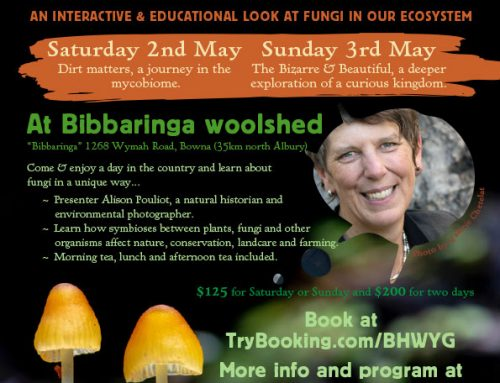 Bibbaringa Fungus Workshop
