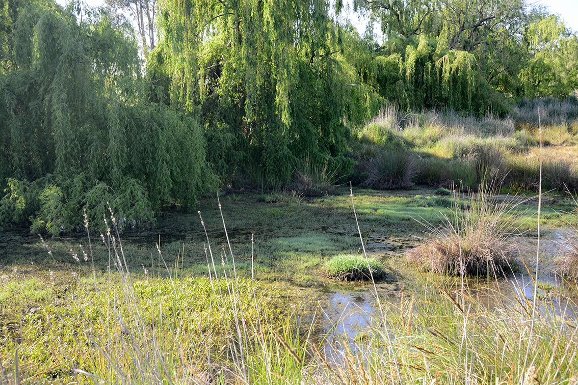 Wetlands on farms create biodiverse environments