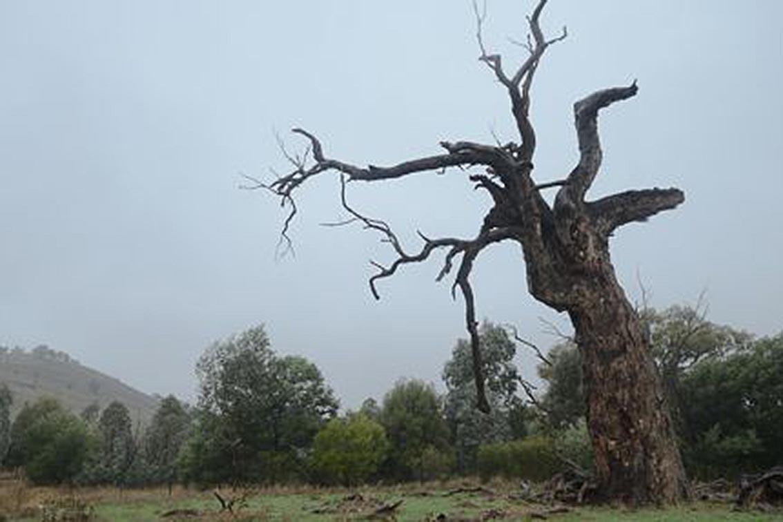 Ecological Land Management Practices
